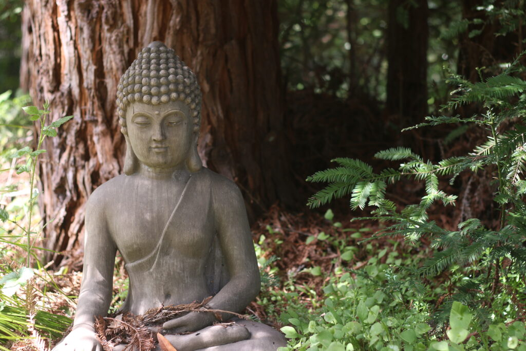 Buddha in the IRC Woods